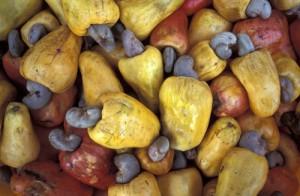 вкусные плоды кешью